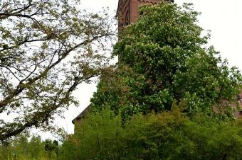 Maibaumständchen